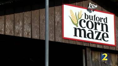 Buford Corn Maze May Fair