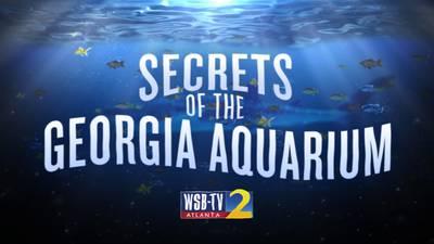 Secrets of the Georgia Aquarium