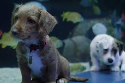 Watch Atlanta Humane Society puppies explore Georgia Aquarium
