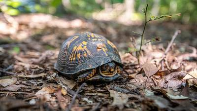 5 turtles stolen from Georgia nature preserve; police searching for suspects