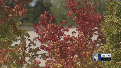 If your trees look like it's fall already -- you may have a problem