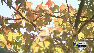 Record heat and little rain could impact fall colors across north Georgia