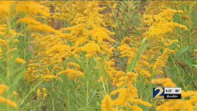 Having allergies? Unfortunately, it's not going anywhere anytime soon