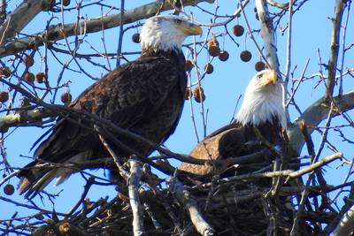 Watch bald eagles, cute dogs, Northern Lights live right now