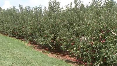 Hard freeze leaves north Georgia apple picking season shorter than normal