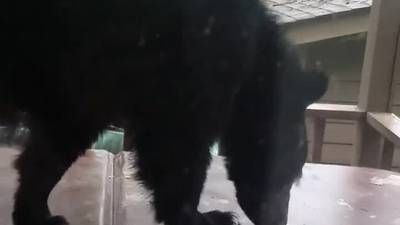 North Georgia resident shares bear video as a reminder about leaving food outside