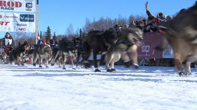 After nearly dying last year, Atlanta man returns to mush in iconic Iditarod race